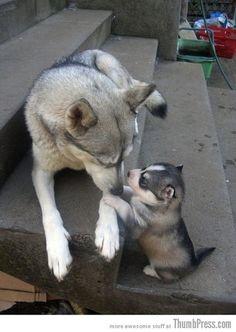 Mom they called me husky!!!