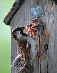 For the love of all birds, I am posting this with a smile. Kinds Of Birds, All Birds, Love Birds, Pretty Birds, Beautiful Birds, Animals Beautiful, Baby Animals, Cute Animals, Tier Fotos