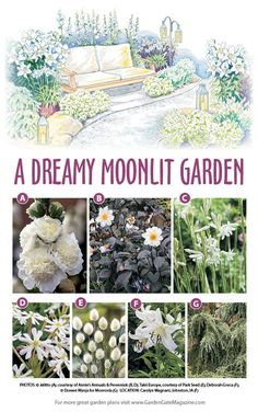 Gardenplan whiteflowers gardening gardengatemagazine make a marvelous make a marvelous moon garden with this garden plan! garden planning in zone 5