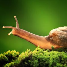 Do you have too many snails in your garden? It could be due to geopathic stress. Snails and slugs thrive on land affected with this.
