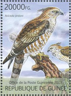 Jerdon's Baza stamps - mainly images - gallery format