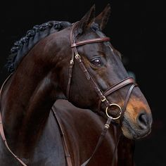 The Hööks Kildare Claridge House® bridle probably has one of the most interesting cavesson styles I've ever seen. Also? That horse. <3