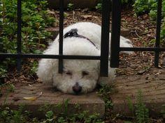 Maxx at the Garden Gate.