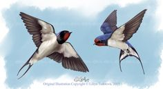 barn swallow painting | All images are copyright © 2006-2015 Lily Todorova