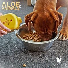 Add Aloe Vera Gel to your pets diet to aid digestion and gut motility. Aloe Vera Gel Forever, Forever Aloe, Forever Living Products, Forever Living Business, Gel Aloe, Aloe Leaf, Natural Energy, Pet Care, Dog Food Recipes
