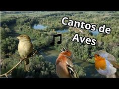 Los cantos de aves más hermosos - YouTube Jesus Christ Painting, Bird Fountain, Nature Sounds, Mother Nature, My Best Friend, Cute Animals, Relax, Birds, Youtube