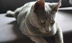 Der deutsche Husse Katzen Blog. Gute Tiernahrung & Futter für die Hauskatzen. Bestellen Sie über unseren Online Shop. Wir liefern kostenfrei nach Hause.