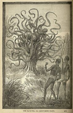 "espressoalchemist:  A Ya-te-veo (""I see you"") man-eating tree of Central America, from Land and Sea by J.W. Buel, 1887. A cryptid similar to Robert Bloch's depiction of the young of Shub-Niggurath"