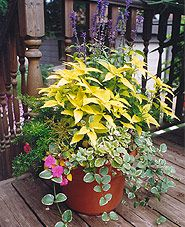 Great source for planter ideas, with good tips on choosing and caring for  the right plants.