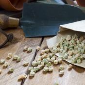 Faire ses graines de légumes