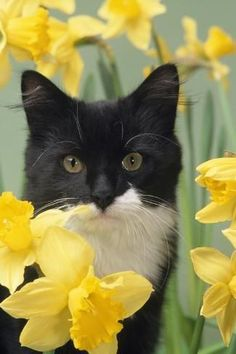 The short answer is yes, cats can see some colors, but not the same range that we can. Let's dig into how cats see and which colors their eyes can detect. Orange Cats, White Cats, Black Cats, Cat Aesthetic, Arte Horror, Cat Facts, Daffodils, Cats And Kittens, Kitty Cats