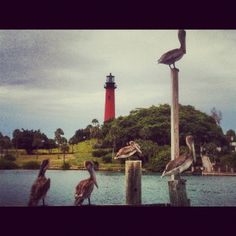 Castaway Marina, Jupiter Beach, FL-  Can't wait to go this morning and take my own pictures!!!!