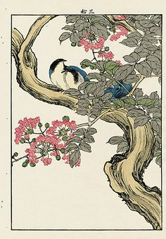"Antique prints of ""Siberia Blue Tail, Crepe Myrtle"" from 1891 Keinen Imao Woodblock Edition Birds & Flowers Japan Japanese Art Styles, Japanese Art Modern, Traditional Japanese Art, Japanese Artists, Vintage Japanese, Antique Prints, Antique Art, Vintage Art, Korean Art"