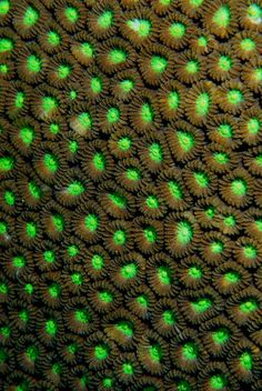The Truly Impressive Array of Colors Found In Underwater Coral - Vivaboo By jennyhoang