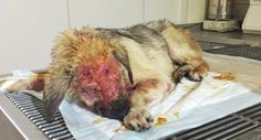 Justice For Peanut! Critically Ill Dog Neglected By Owners And Dumped To Perish! | PetitionHub.org