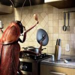 Roaches are filthy creatures that are responsible for many health problems. So you need to get rid of a roach infestation. There are many home remedies for roaches that are at your disposal. Learn these quick methods to get rid of cockroaches. Roach Control, Bug Control, Best Pest Control, Pest Control Services, Smart Kitchen, Home Remedies For Roaches, House Insects, Termite Control, Bees And Wasps