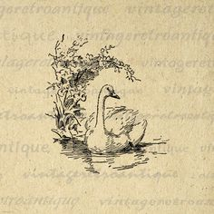 Printable Duck Graphic Image Illustration Download Bird Digital Antique Clip Art. Printable digital image illustration. This vintage high quality digital artwork can be used for making prints, fabric transfers, pillows, papercrafts, and much more. This graphic is large and high quality, size 8½ x 11 inches. Transparent background PNG version included.