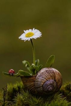 Spring in nature, snail, ladybug, daisy Beautiful Flowers, Beautiful Pictures, Amazing Photos, Fotografia Macro, Macro Photography, Photography Reflector, Photography Flowers, Photography Awards, Modern Photography