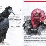Birds on Bills by Paula Swisher