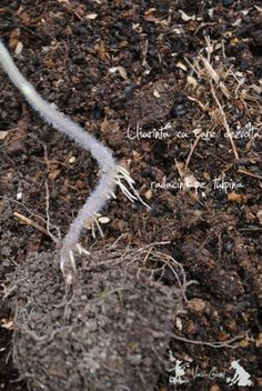 How to grow tomato plants from seeds and when is the right time to transplant them to an outdoor garden. Growing Tomatoes From Seed, Grow Tomatoes, Dried Tomatoes, Tomato Plants, How To Dry Basil, Dandelion, Seeds, Backyard, Gardening