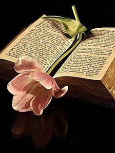 La fleur est le livre