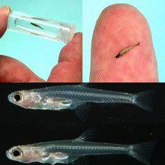 hewan paling kecil dunia