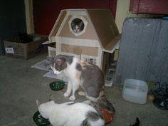 """""""Negrito"""" (""""Bombay"""") ocupa la cajita de cartón de la izquierda - """"Mamá Buena"""" vigila la faena de alimentación frente a la Casita Refugio. #Cat #Gato"""