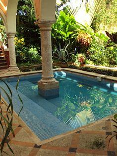 Sultry Swim [Merida, Mexico]