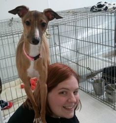 Bella is an adoptable Italian Greyhound Dog in Clear Lake, IA. Meet Princess Bella.  She is a Miniature Italian Greyhound.   She is so outgoing.  She pops around from person to person to see who will ...