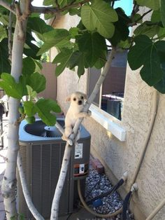 10  Funny Animal Pictures
