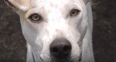 Dog Abandoned With Heartbreaking Note Finds Someone To Believe In Him