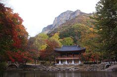 내장산 - 쌍계루와 백학봉(백학봉의 진달래)(Mt. Naejangsan, Korea)