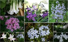 From top left corner clockwise: Angel's Trumpet, Blue Fox Tail Orchid, Tropical Lilac, Needle Flower, Crepe Jasmine, plumbago, Agapanthus, rain lily, Pentas.
