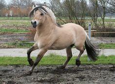 Hengstenhouderij Hestegaarden