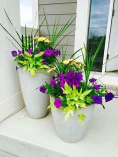 90 Stunning Spring Garden Ideas for Front Yard and Backyard Landscaping Green spike plant + yellow osteospermum thriller, Deep purple petunia filler w Lime green potato vine spiller ? Outdoor Flowers, Outdoor Planters, Garden Planters, Cement Planters, Potted Plants Patio, Front Porch Planters, House Plants, Front Porches, Planter Pots