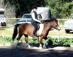 Article: Bridle Lameness http://www.lizgraves.org/sound%20advocate%20articles/bridle_lameness_gaited_horse.pdf