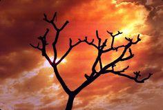 A TREE..WESTERN KENYA