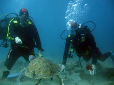 Reistid #reisetid #travel #travelblog #reiseblogg #reise #reiseliv #tenerife #turtle #seaturtle #sea