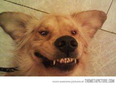 Matchdog.com ... Rover has a winning smile ...