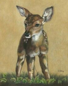 This is a colored pencil drawing by Carol Gray. It is so amazing it looks like painting!