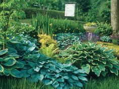 Hostas 101 | So many colors, so many kinds, so many choices. These shade-loving perennials rule.