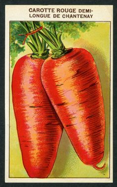 Antique French Seed Pack Label: Vegetable Carotte Rouge Lithograph France 25