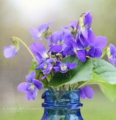 Violets - we had them growing in and around out house when I grew up and I always had little vases filled with them just like this....