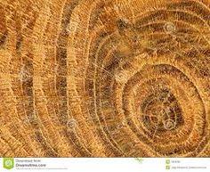 Afbeeldingsresultaat voor structuur natuur