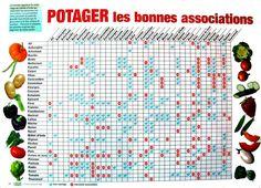 L'association de légumes est plus productive que la monoculture!