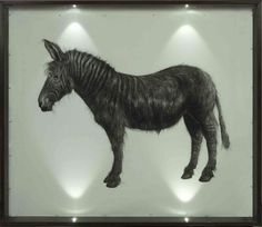 Hugo Wilson, name: zeedonk date: 2009,  dimension: 200cm x 170cm, (medium): charcoal and pencil on paper
