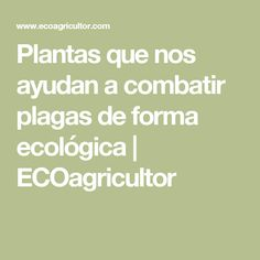 Plantas que nos ayudan a combatir plagas de forma ecológica  | ECOagricultor