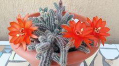 cactus-y-suculentas-tarjetas-imprimibles6