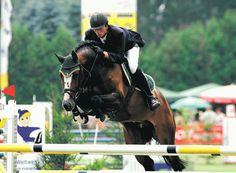 """Balou du Rouet"" love this stallion! Absolutely stunning!"