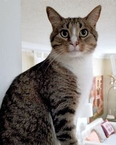 Hello There Bright People Are You Looking Petlover Or Have You Any Pretty Pets I Think You Love A Cute Face So Follow Our B Cat Sitter Cat Lovers Cats